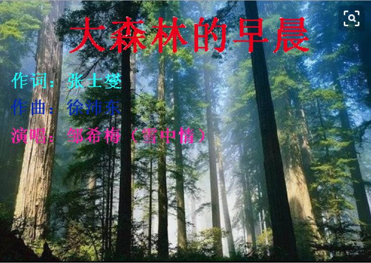 大森林的早晨 邹希梅(雪中情)