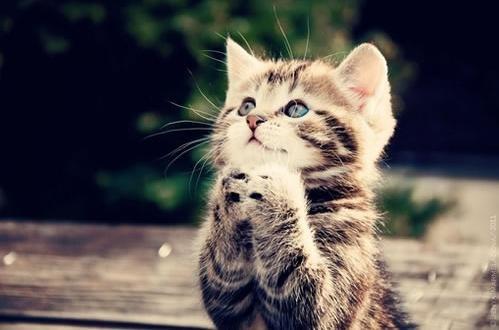 为和平祈祷歌谱