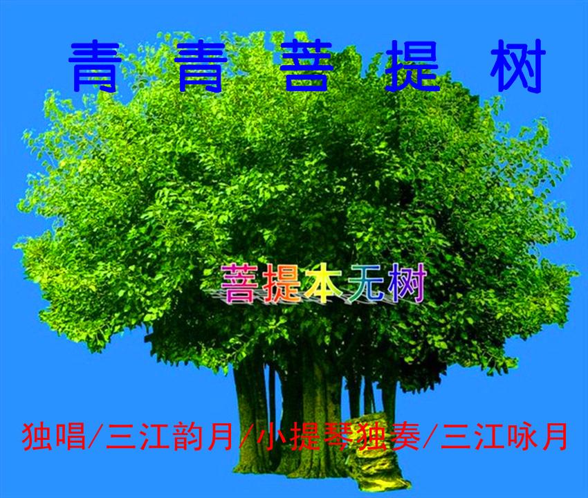 青青菩提树(三江韵月独唱)