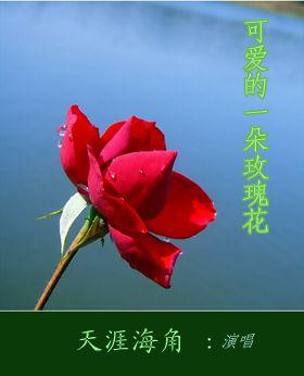 可爱的一朵玫瑰花 【天涯海角】