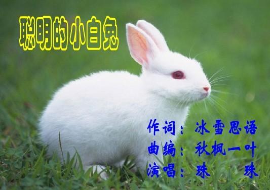 《聪明的小白兔》(珠珠首唱版)