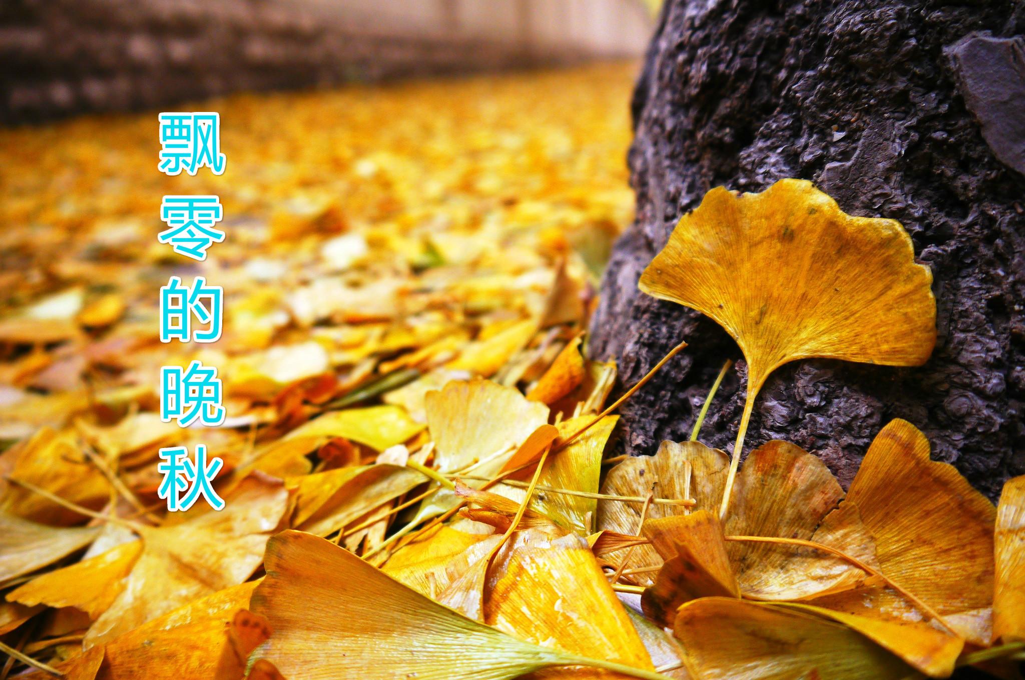 飘零的晚秋 - 天籁天 - 5SING中国原创音乐基地