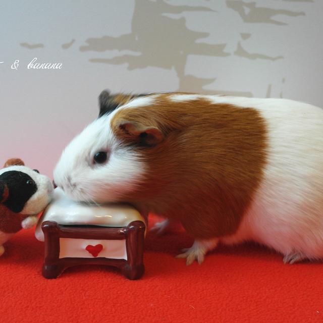 猪宝图片大全可爱图片