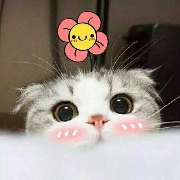 猫加油图片大全可爱