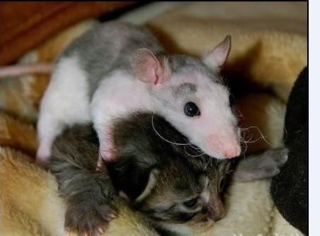 天津快板 猫和老鼠 琴艺悠扬图片